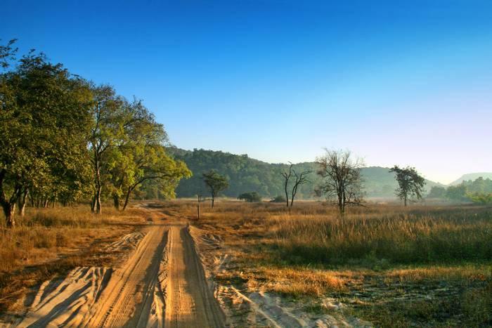 Bandhavgarh National Park, India shutterstock_1398483776.jpg