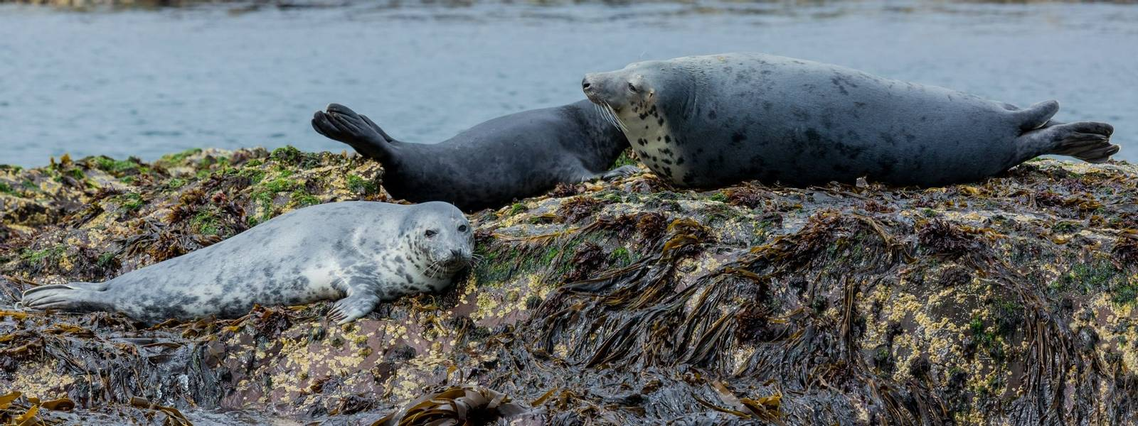 Alnmouth - Wildlife - Grey Seals - AdobeStock_213353117.jpeg