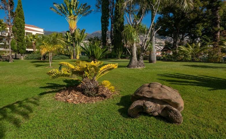 Portugal - Gardens of Madeira - Alberto Reynolds  - 32. COLOMBO 61 YO GALAPAGOS TORTOISE @ QUINTA JARDINS DO LAGO.jpg
