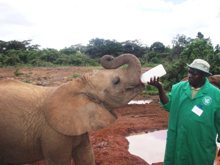 David Sheldrick Wildlife Trust, Nairobi, Kenya