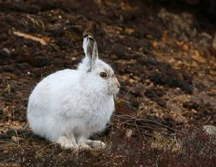 Scotland's Winter Wildlife Photography Tour