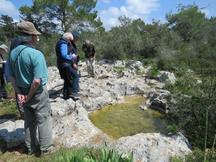 Pools in limestone hollows (Heather Osborne)