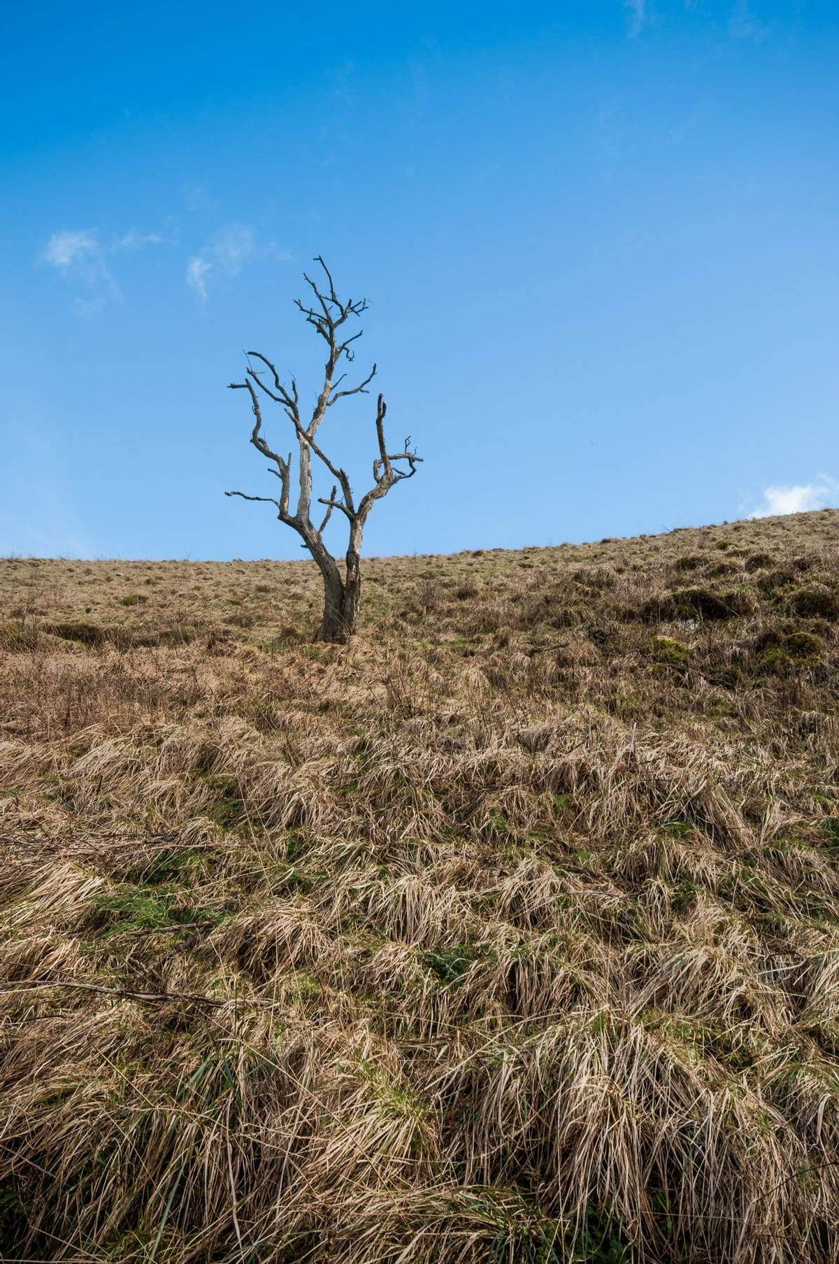 Solitary tree in Dovedale, Peak District National Park