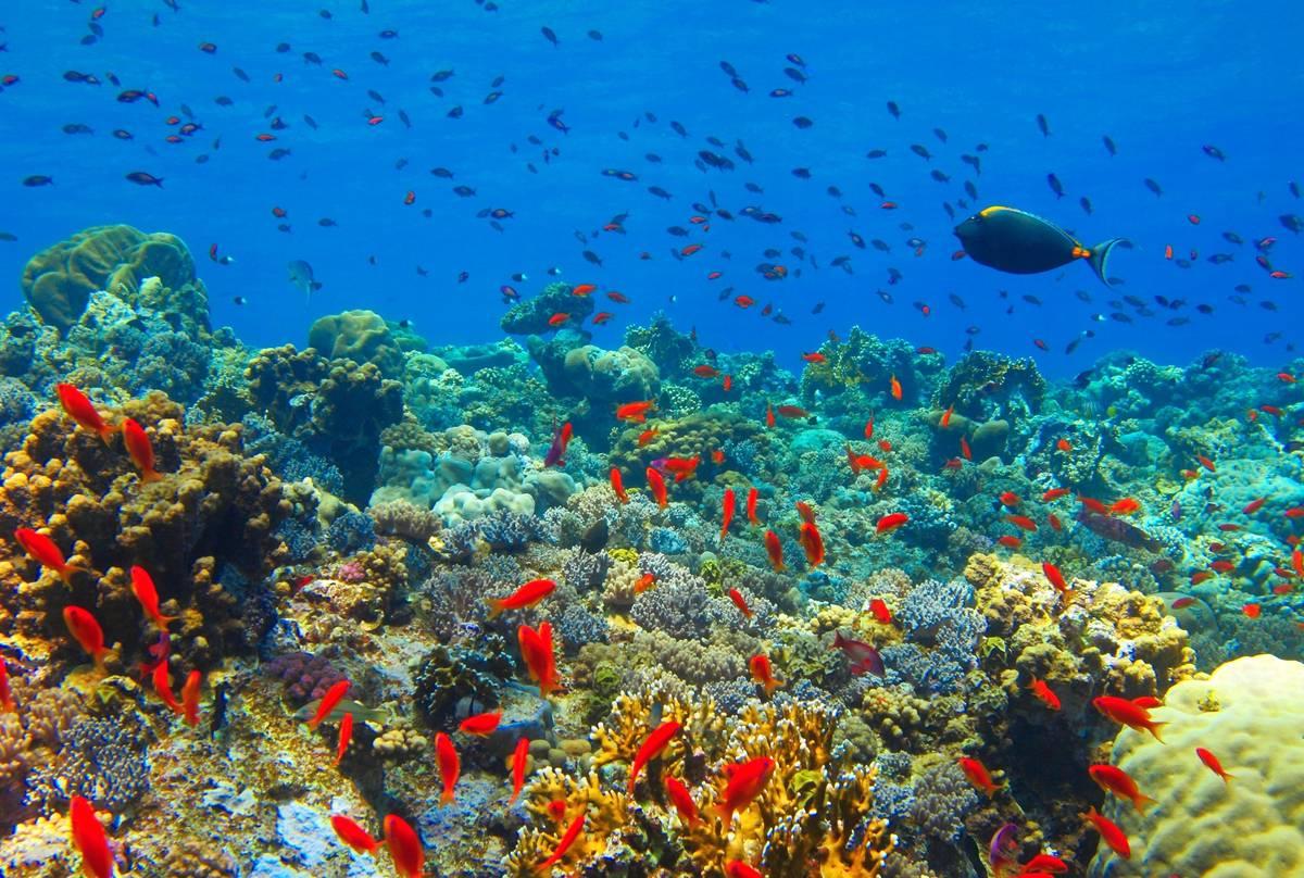 Zanzibar Coral Reef shutterstock.jpg