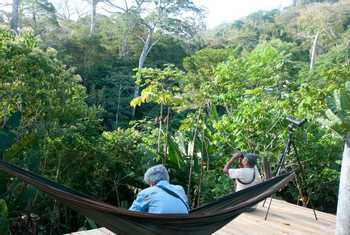 Birding in the canopy (Fernando Alba, Canopy Family)
