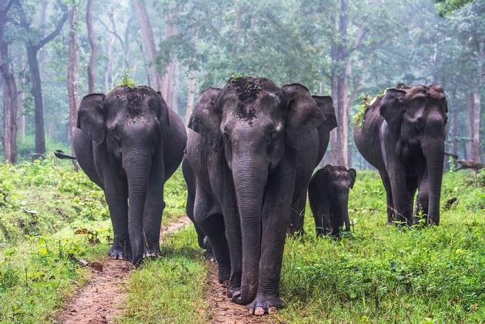 Asian-Elephant-shutterstock_1149214802.png