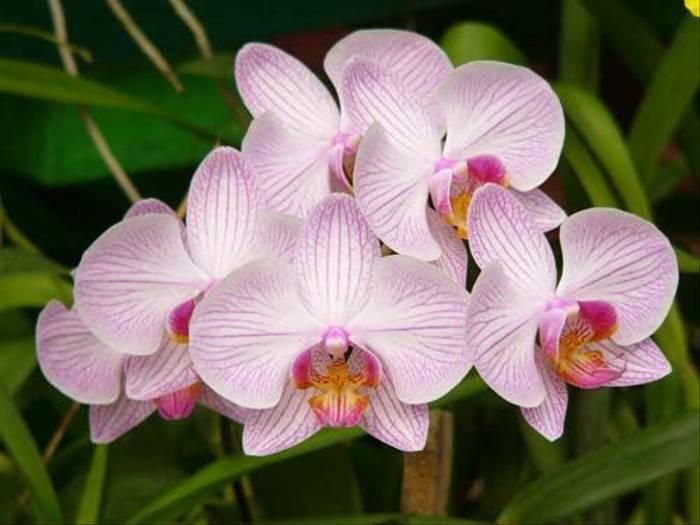 Orchid sp. (Barbara Lovell)