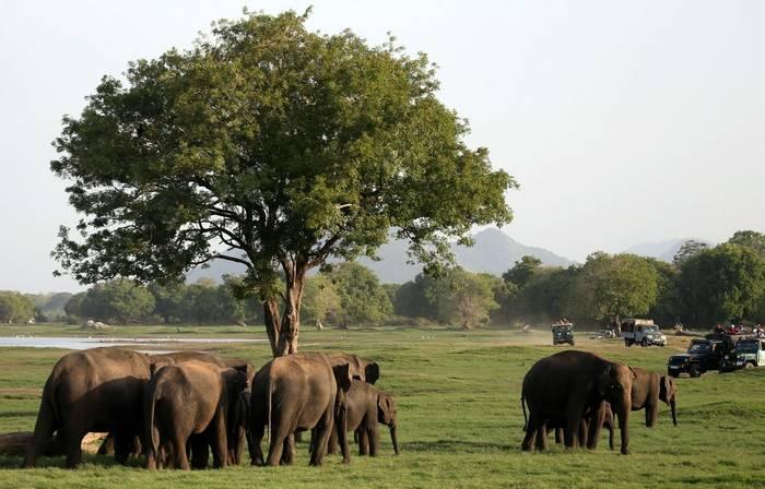 Elephants (Karen Malte Nielsen)