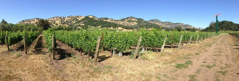 napa-valley-vineyard-intrepid-pixabay-1.jpg