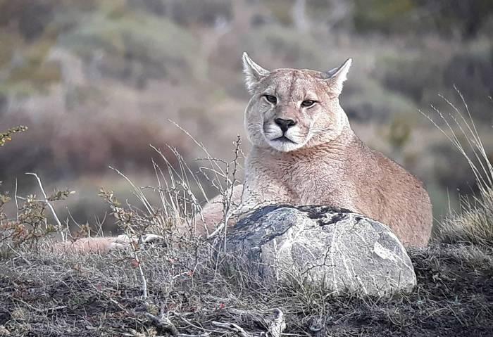 Puma (Tom Mabbett)