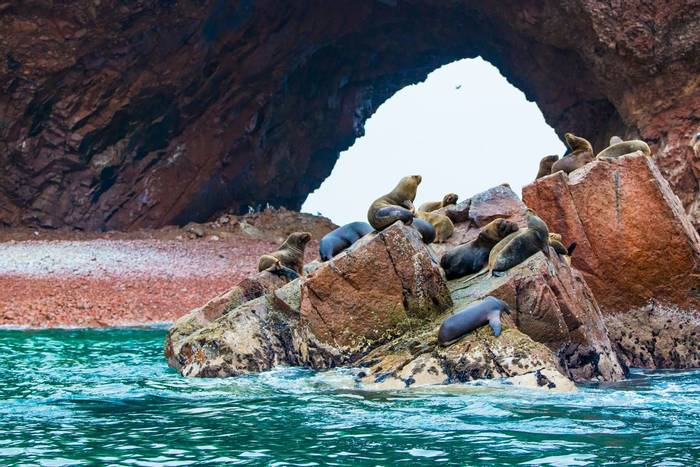 Southern Sea Lions, Ballestas Islands, Peru shutterstock_169867406.jpg