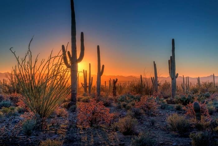 Day 12 - Saguaro National Park