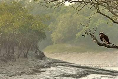 The Sunderbans by Sujan Chatterjee