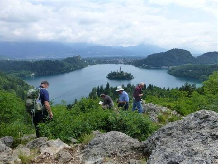 Botanising above Lake Bled