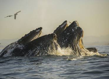 Whales & Dolphins of Monterey Bay