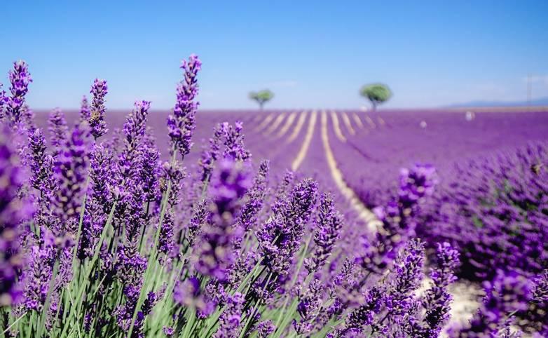 France - Provence - AdobeStock_238099322.jpeg
