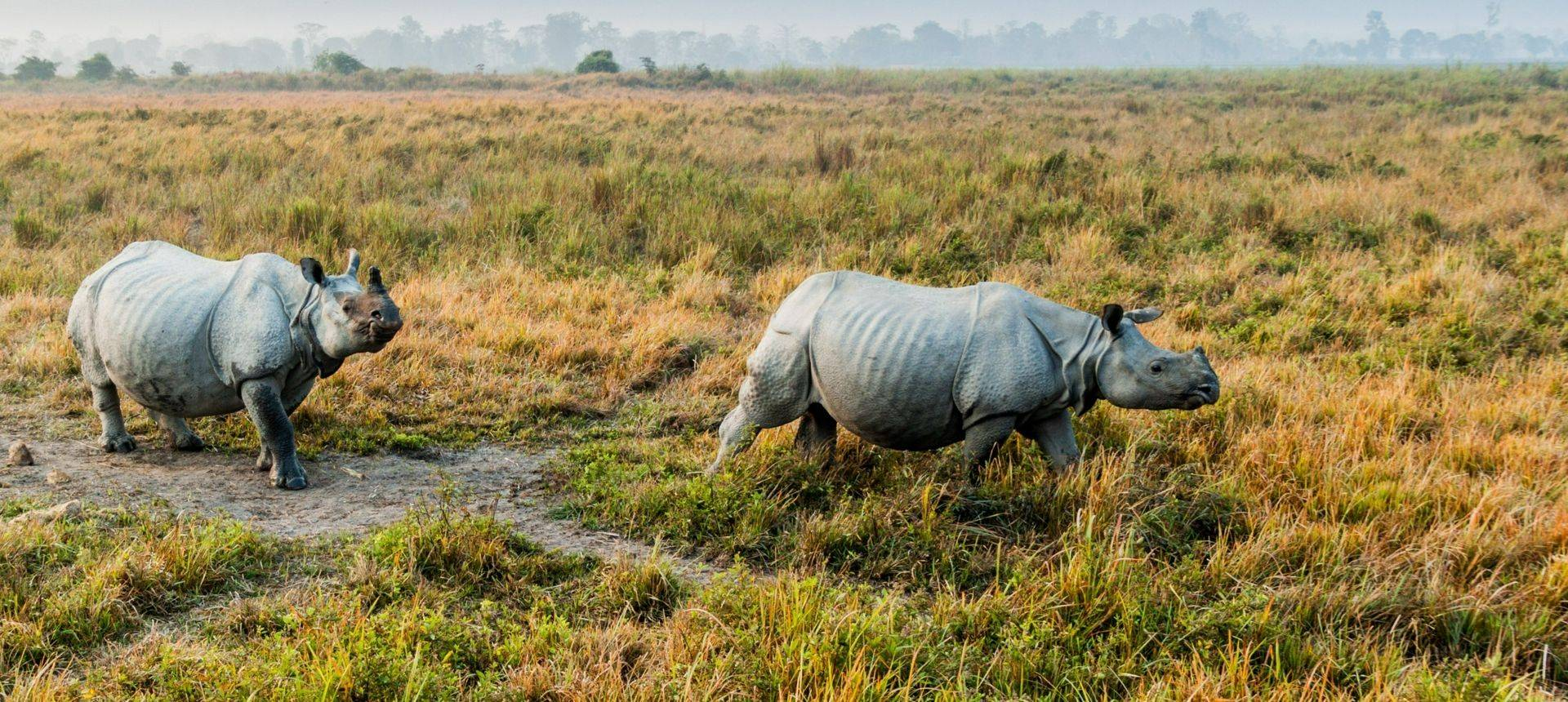 Indian Rhino, Kaziranga National Park Shutterstock 782876899