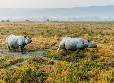 The Best of Bhutan, Manas and Kaziranga
