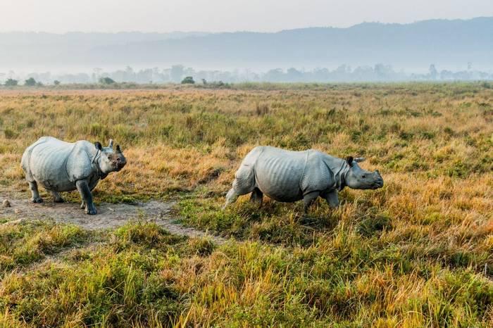 Indian Rhino, Kaziranga National Park Shutterstock 782876899