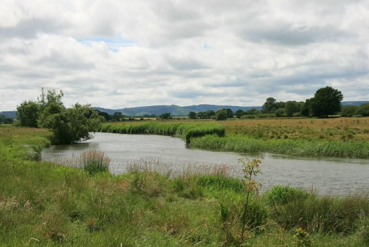 River_Arun_Pulborough.JPG