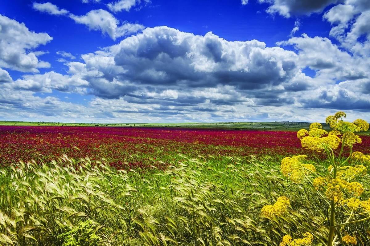 Puglia - Alta Murgia Nationa Park - wild flowers - AdobeStock_59829059.jpg