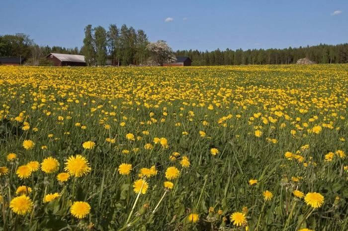 Flower Meadow (Paul Stanbury)