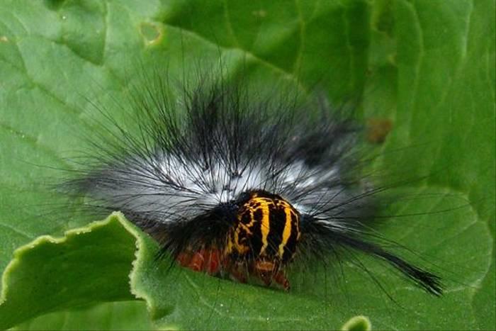 Caterpillar sp. (Gordon Rae)
