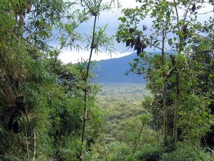 Cordillera de los Guacamayos (Byron Palacios)