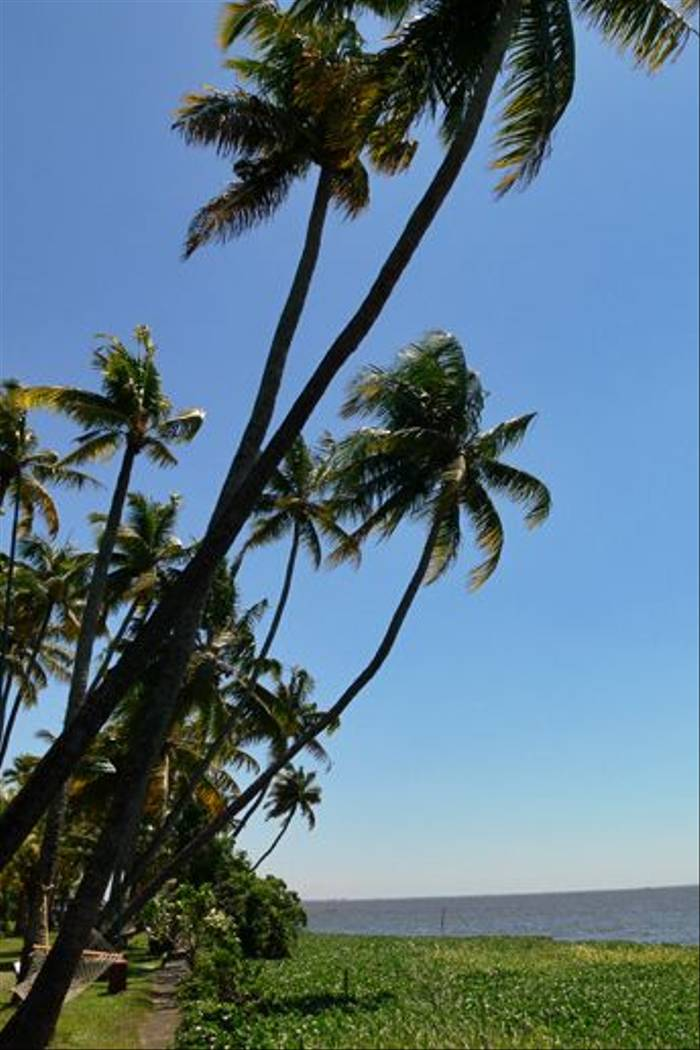 Kerala (Tim Melling)