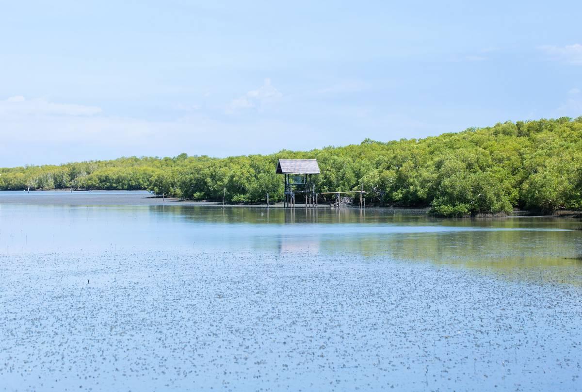 Laem Phak Bia - Habitat for Spoon-billed Sandpiper and Malaysian Plover
