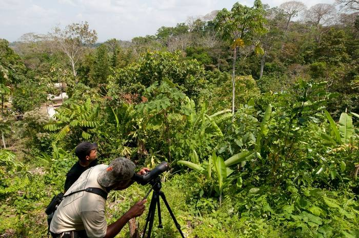 Birding (Fernando Alba, Canopy Family)