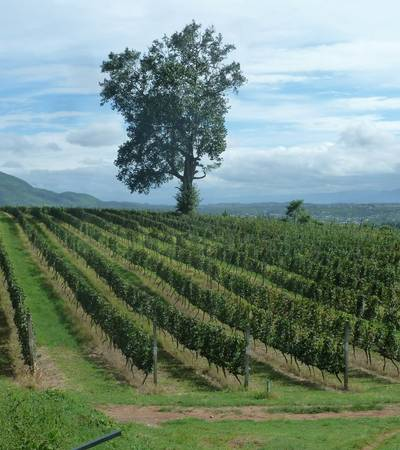 Red mountain vineyard