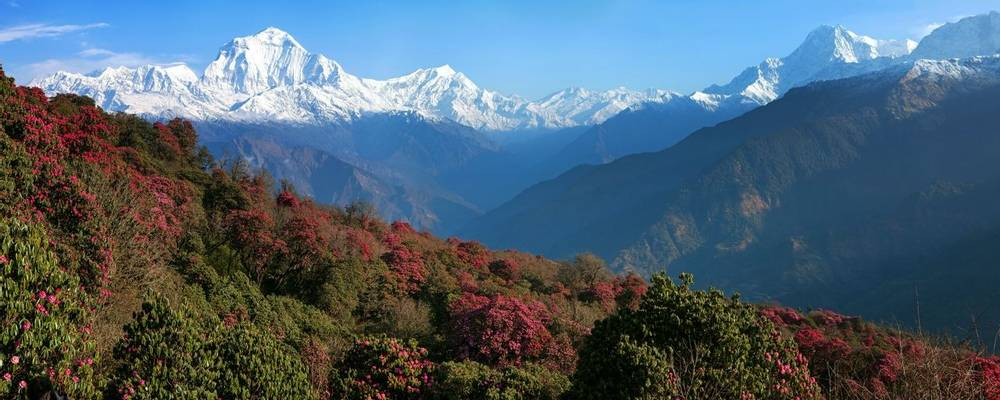 View Of Dhaulagiri (7th Highest Summeit) From Poon Hill, Himalaya, Nepal Shutterstock 132166100