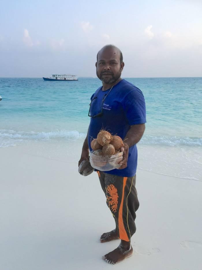 Freshly picked coconuts.JPG