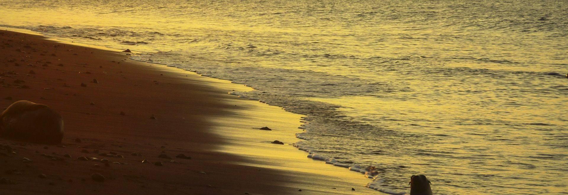 Galapagos Shore Sunset Seal Boat Silhouette-Omar Medina 2014-P1070628 Lg RGB.jpg
