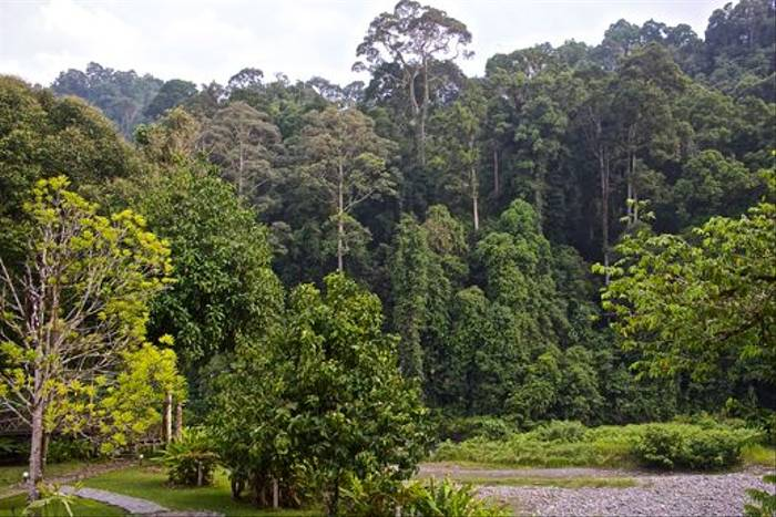 View from Borneo Rainforest Lodge (Dani Free)