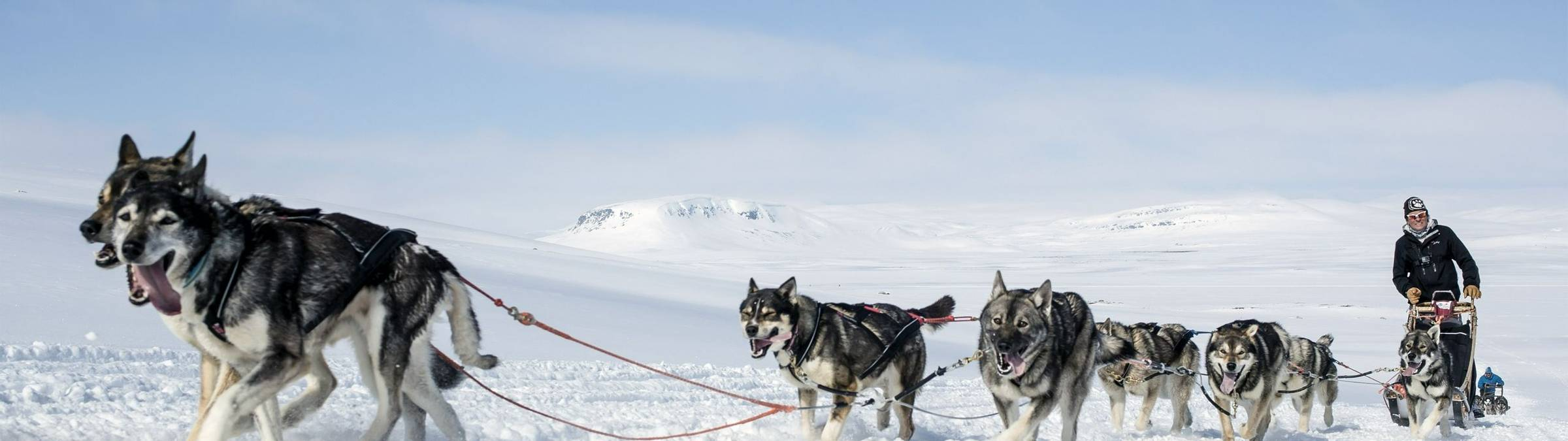 Harriniva Hotels & Safaris Huskies 21