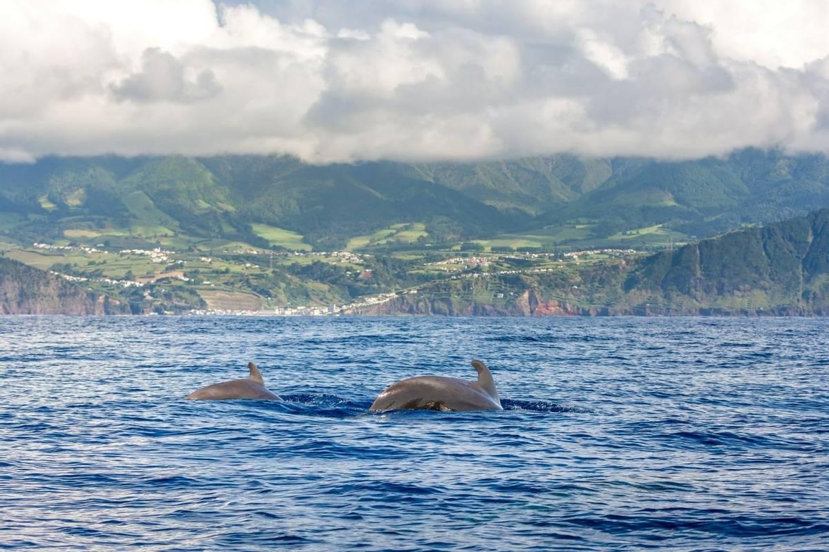 Sao Miguel, Azores Shutterstock 724246156
