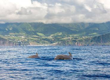 Great Whales of the Azores (São Miguel)