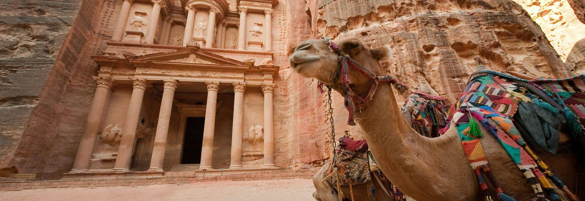 Camel in front of the treasury or Al Khazna, it is the most magnificant and famous facade in Petra Jordan, it is 40 meters h…