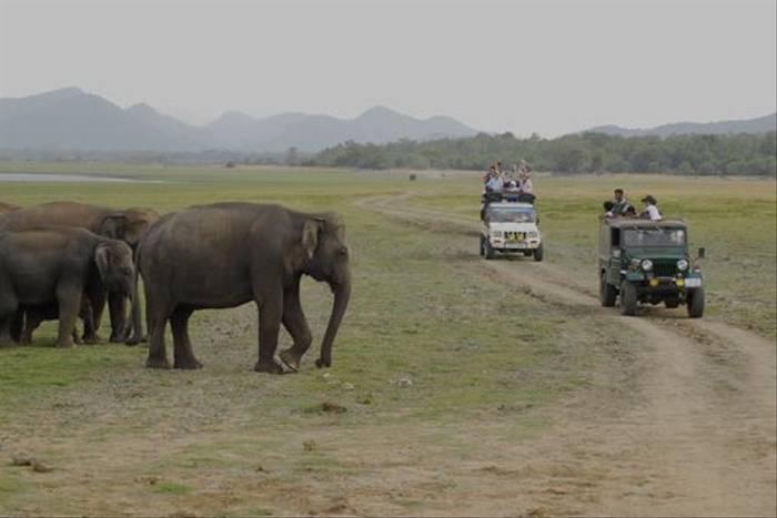 Jeep safari to see Asian Elephants in Minneriya (Thomas Mills)