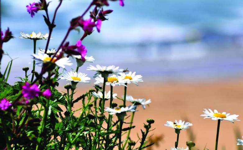 St Ives - generic coast - iStock_000024697458_Large.jpg