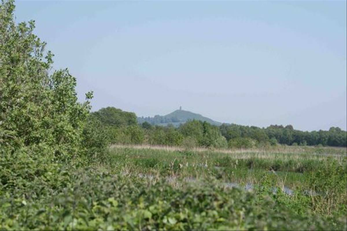 Glastonbury Tor from Ham Wall (Ed Drewitt)