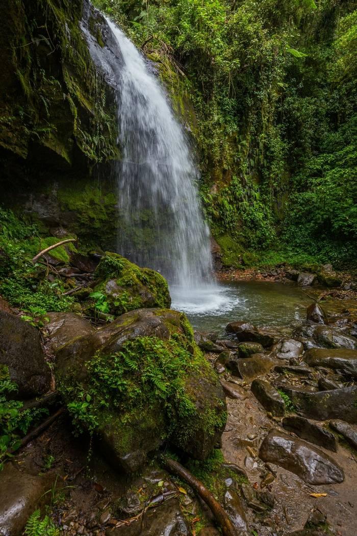 Reptile and amphibian habitat in Panama