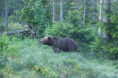 Brown Bear by Kerrie Porteous
