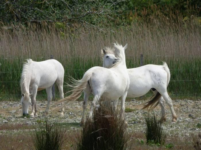 Horses (Debbie Hart)