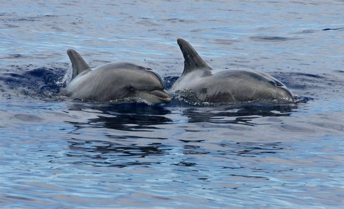 Bottlenose Dolphin (George Reekie)