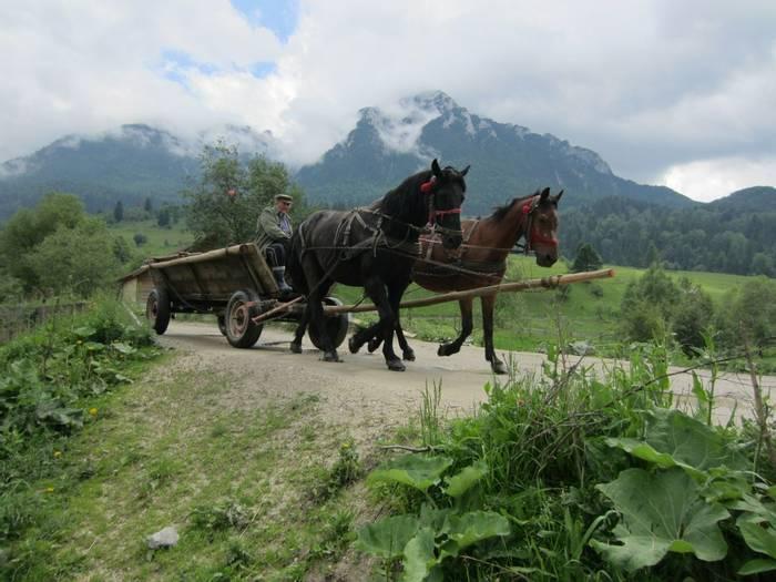 Barsa Valley Horse And Cart (Rob Murray)