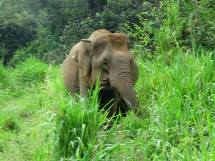 Elephant (David Hartill)