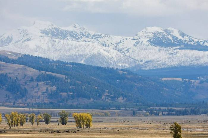 Lamar Valley PJD
